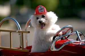 fifi-the-fire-dog-michael-ledray